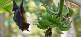 مخاوف من فيروس جديد مصدره الصين وتسببه الخفافيش يقتل ثلثي المصابين به