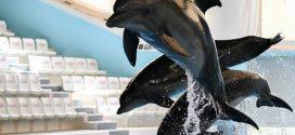 تصدير اثنين من دلافين البحر الأسود إلى المغرب بشكل غير قانوني