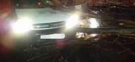 عاصفة رعدية تتسبب في سقوط شجرة كبيرة على سيارة خفيفة