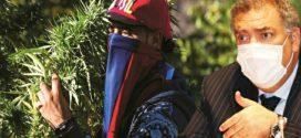تحت الأضواء | وزارة الداخلية تنتقل من محاربة زراعة القنب الهندي إلى الدفاع عنه