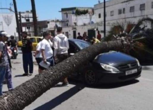 سقوط نخلة بالشارع العام بتطوان كاد يتسبب في كارثة