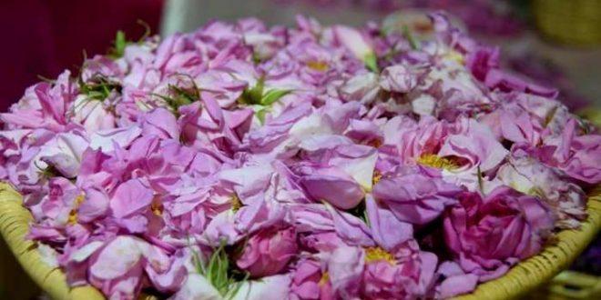 الوردة الدمشقية في فجاج قلعة مكونة